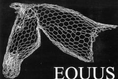 Equus_01